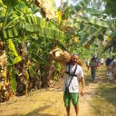 Banana tree cutting