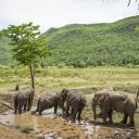 Mud bath for our elephants