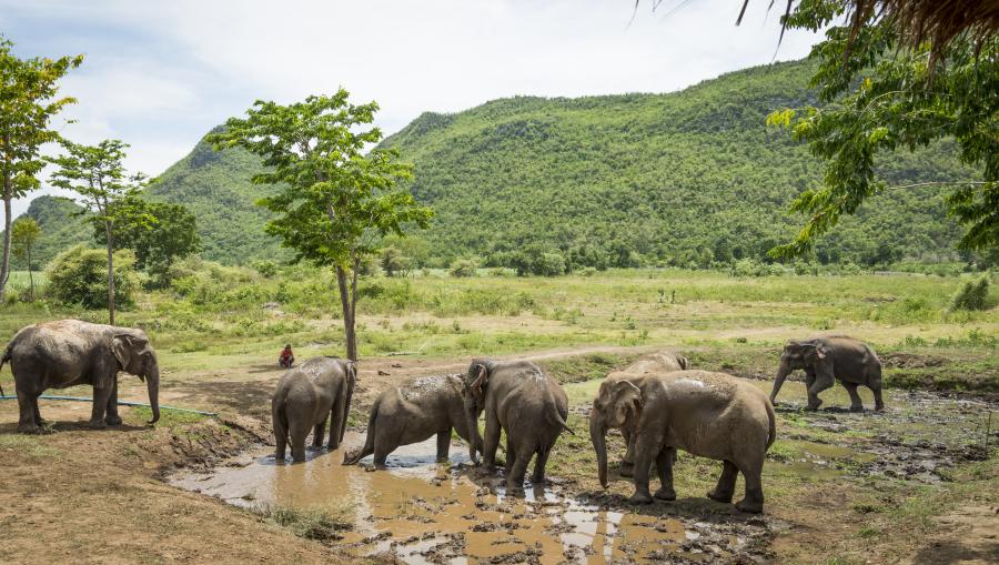 Day program (1 day) • ElephantsWorld