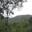 Forest Program