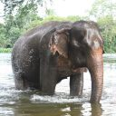 Songkran now