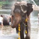 Thai national elephant day 2015 at ElephantsWorld
