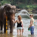 Thai national elephant day 2015 at ElephantsWorld