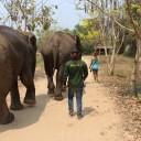 Walking the elephants