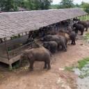 ElephantsWorld aerial photo 1