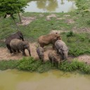 ElephantsWorld aerial photo 5