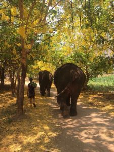 Walking down the road with the elephants