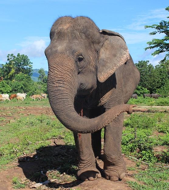 Jarunee • ElephantsWorld