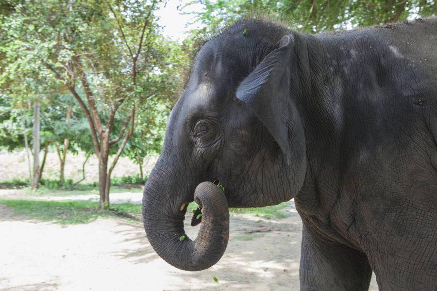 Spy • ElephantsWorld