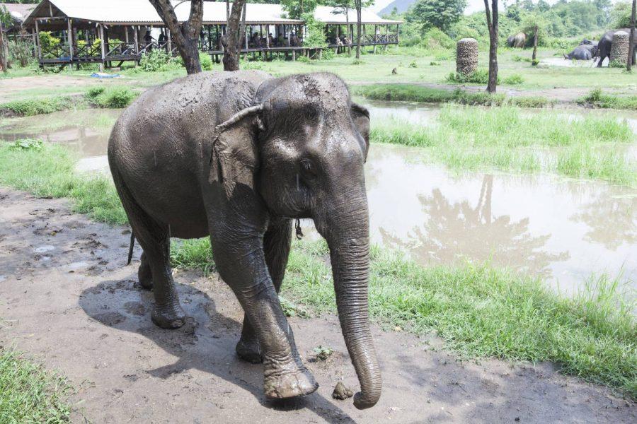 Hong Faa • ElephantsWorld