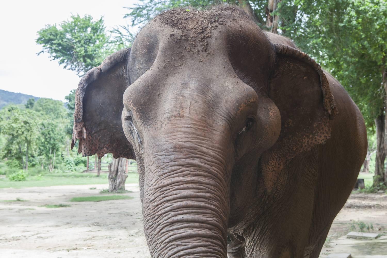 Sri Thong • ElephantsWorld