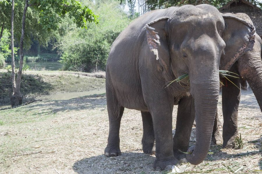 To-Me • ElephantsWorld