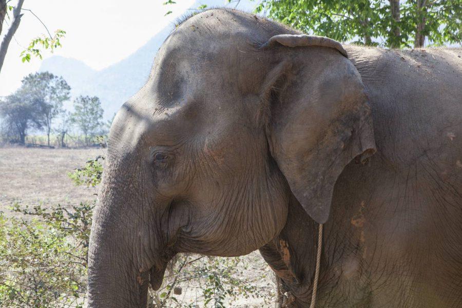 Nam Oi • ElephantsWorld